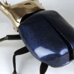ATLAS BEETLE